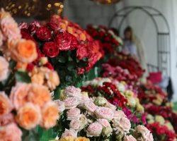 XXI Święto Róż w Gminie Końskowola